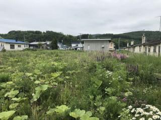【ENP】FIT18円 北海道遠軽町太陽光発電所②のサブ画像